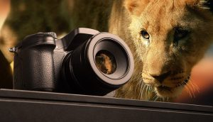 Lion 300x172 - A Quick Guide to Photography Basics for Beginners
